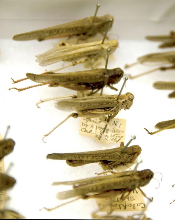 120816_grasshopper
