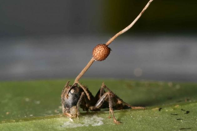 modern-day-ant2