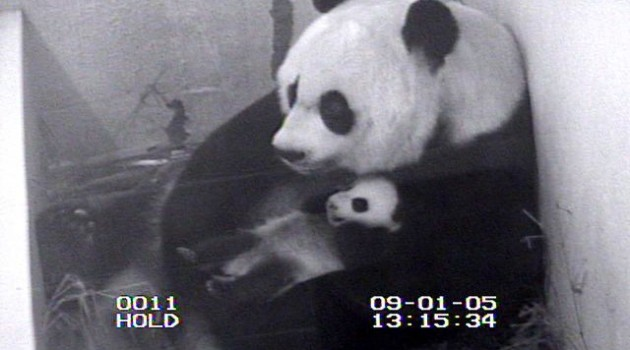 Panda cub born at National Zoo to Mei Xiang
