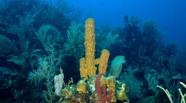 Smithsonian launches Global Marine Biodiversity Project with $10 million donation