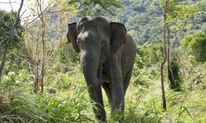 Wild Asian elephants in Sri Lanka. (Photo by Amanda Perez, Smithsonian's National Zoo)