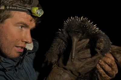 Scientist Kristofer Helgen, Smithsonian Institution, examines a long-beaked echidna in the wild on the island of New Guinea, where a small and declining population of the species is still known to exist. (Photos by Tim Laman)