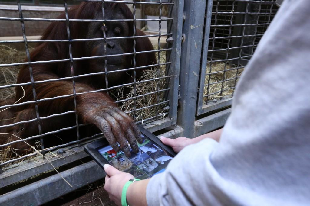 Ape with app