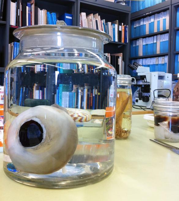 giant squid eye