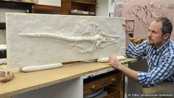 Replicating whale fossils found in Chile