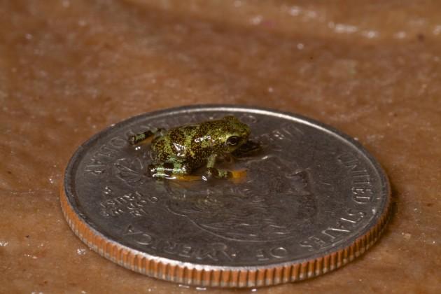 frog-on-quarter