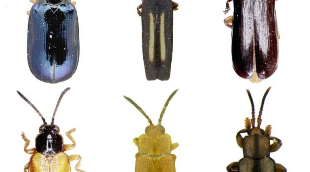 Going for the gut: DNA from beetle stomachs reveals complex network