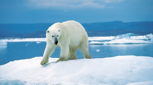 Polar bears in a warming world: Q&A with Don Moore of the National Zoo