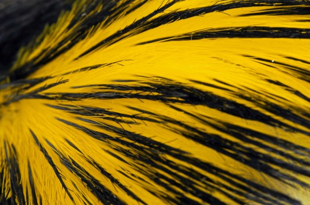 Penguin_feather_image2