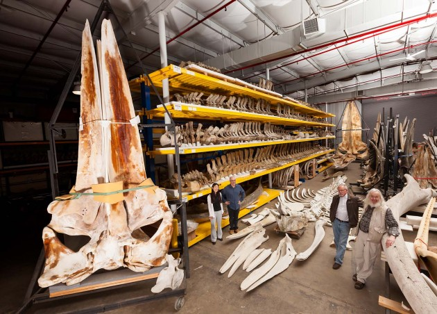 Marine Mammal Collection