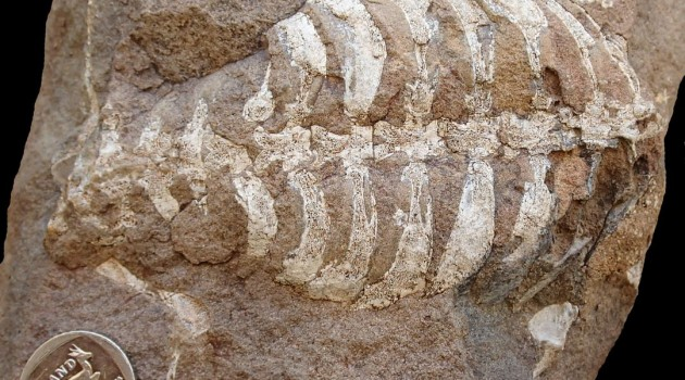 Discovery: Turtle shells appeared 40 million years earlier than previously believed