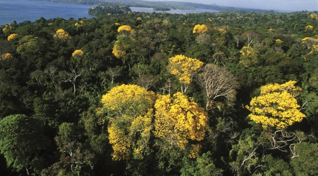 Rising temperatures mean more blooms for tropical rainforests