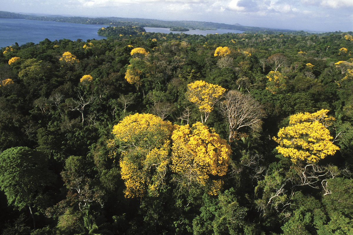 TABG1 (3). Forest canopy ... & Rising temperatures mean more blooms for tropical rainforests ...