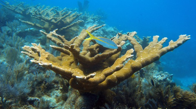Q&A: Katie Cramer on the long term human impact on coral reefs in Caribbean Panama