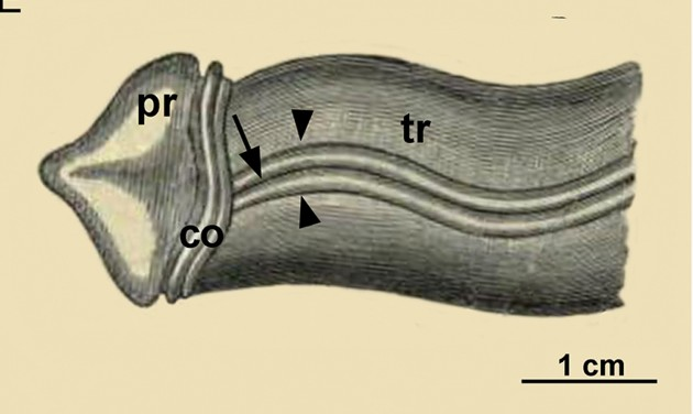 worm illustration