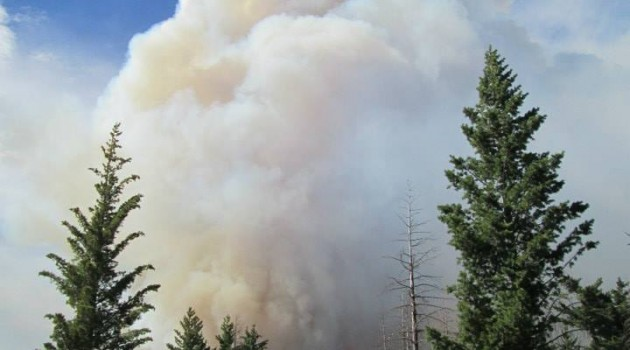 Smithsonian research plot burns in Yosemite fires