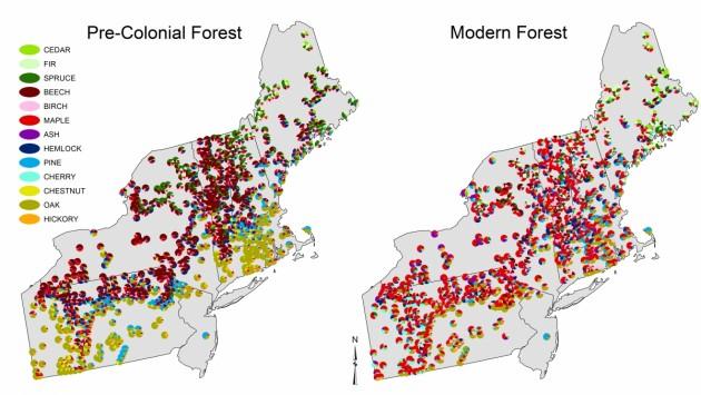 Fig3_Forest_compositional_comparison
