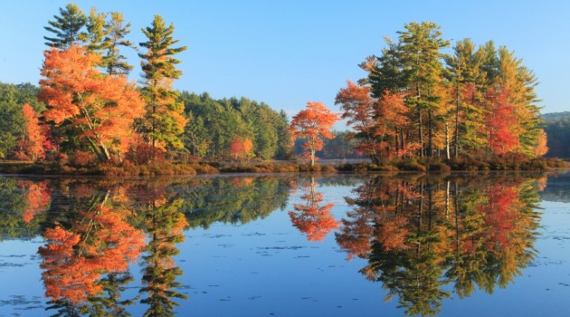 400-year study finds Northeast forests resilient, changing