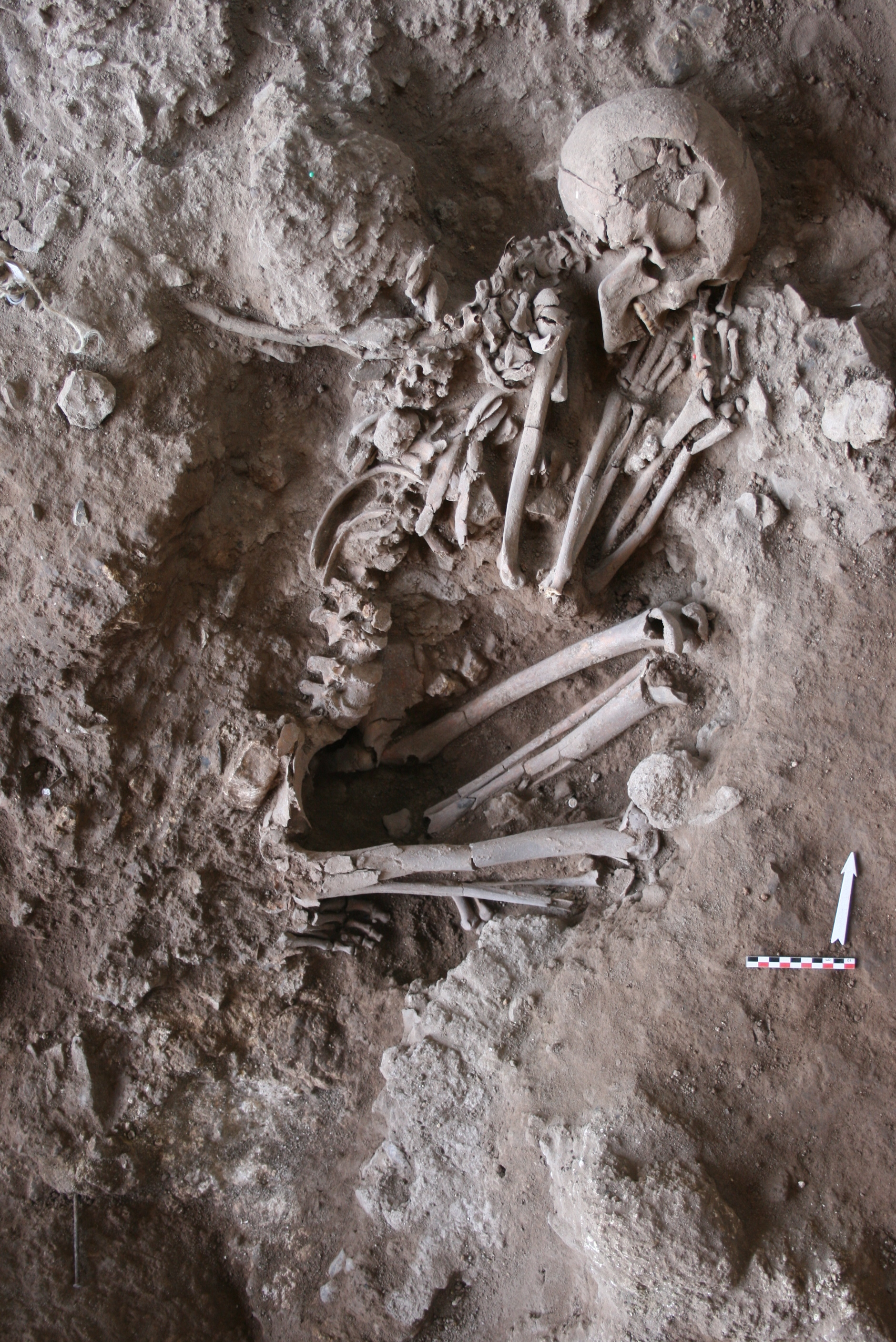 Funeral Flowers In The Stone Age Qa With Smithsonian