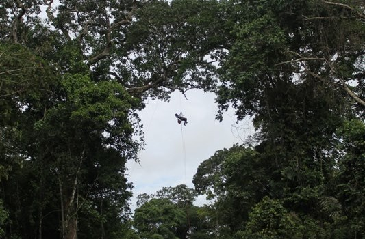 "Tremie Gregory uses camera traps to study ""bridges"" in the rainforest canopy"