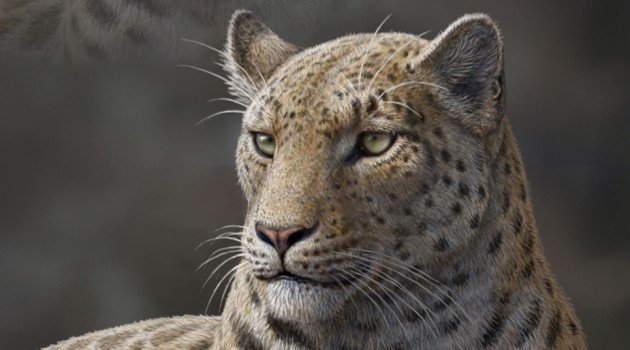Smithsonian scientist confirms missing link in big cat evolution