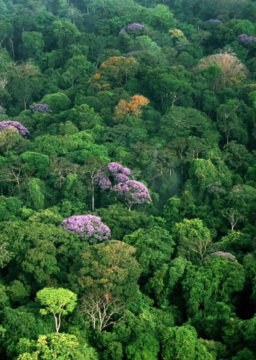 Tropical forest canopy (Photo by Christian Ziegler)