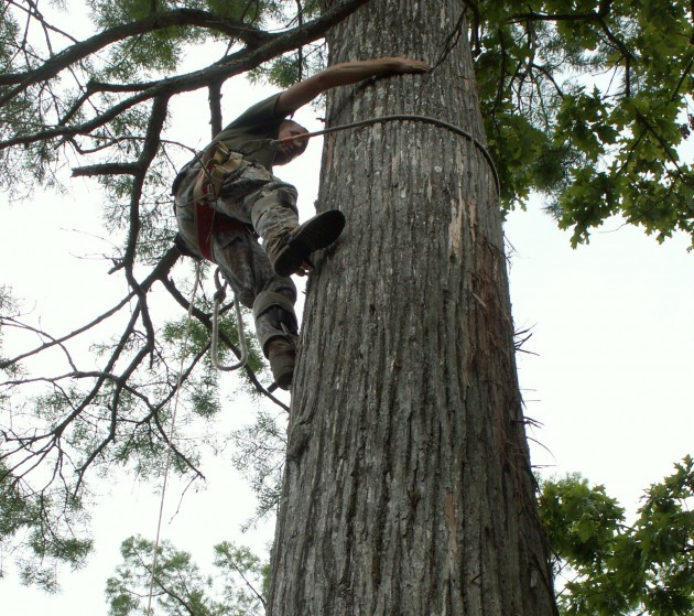 USDA Biologist Troy Bader climbs a swift nest tree in the White River National Wildlife Refuge in Arkansas. (Photo by Gary Graves)