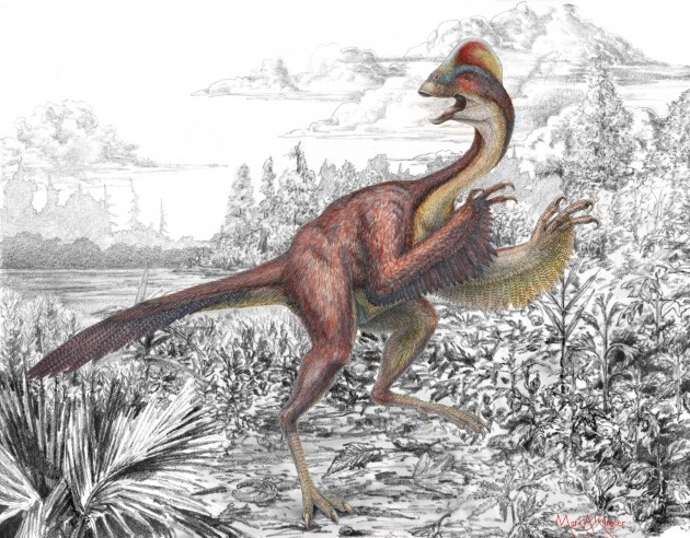 An illustration of Anzu wyliei shows several striking anatomical features of the large, feathered dinosaur, including its long tail, feathered arms, toothless beak and a tall crest on the top of its skull. The new species was identified by a team of Smithsonian scientists in collaboration with the Carnegie Museum of Natural History and University of Utah from three partial skeletons collected from the Hell Creek Formation, providing detailed evidence of North American oviraptorosaurs for the first time. (Illustration by Mark Klingler, Carnegie Museum of Natural History)