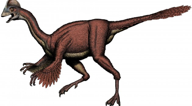 An illustration of Anzu wyliei shows its long, slender ostrich-like neck and hind legs; unlike an ostrich, A. wyliei also had forelimbs that were tipped with large, sharp claws. The new species was identified by a team of Smithsonian scientists in collaboration with the Carnegie Museum of Natural History and University of Utah from three partial skeletons collected from the Hell Creek Formation, providing detailed evidence of North American oviraptorosaurs for the first time. (Illustration courtesy Bob Walters)