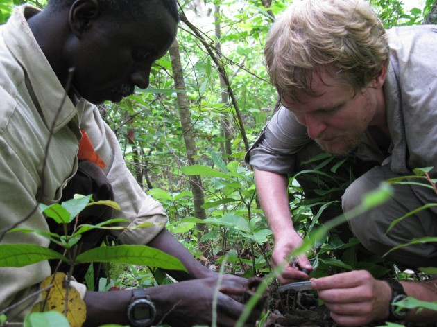 Robert O'Malley, right, and colleague collect insects in the jungle. These specimens were later taken to a laboratory to measure their nutritional value as a chimpanzee food source. (Photo courtesy Robert O'Malley)