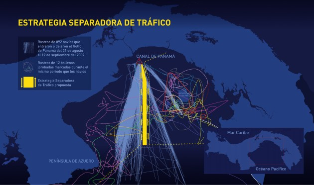 Traffic Separation Scheme: The blue lines show ships that entered or left the Gulf of Panama between Aug. 21 and Sept. 19, 2009. Colored lines show the tracks of 12 tagged whales during the same period. In the new scheme, boats would all enter via the yellow area. (Image courtesy Smithsonian Tropical research Institute)