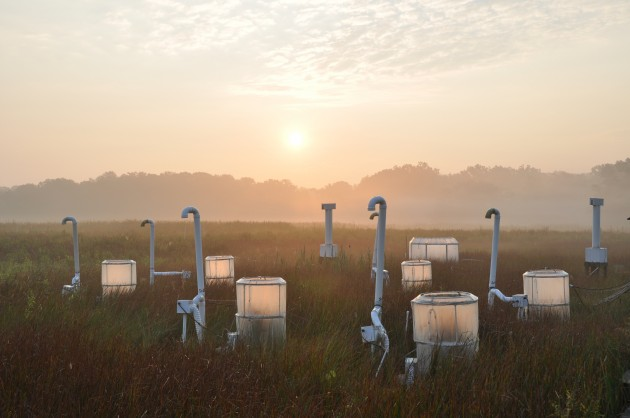 Global Change Research Wetland (Photo by Thomas Mozdzer)