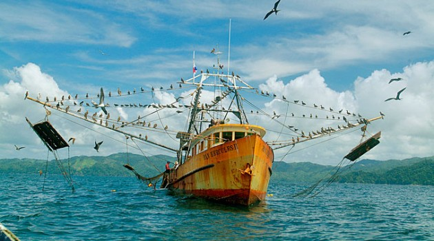 Panamanian fish catch is vastly under-reported, study reveals