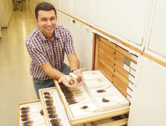 Ricardo Moratelli in the collections area of the Smithsonian's National Museum of Natural History holds two bats that he has recently helped classify as new species. (Photo by Micaela Jeminson)