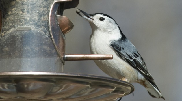 Simple tips to keep your backyard birds healthy this winter