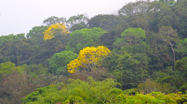 Smithsonian scientists discover tropical tree microbiome in Panama
