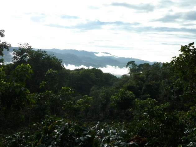 A coffee farm in Costa Rica where the survey was conducted. (Photo by S. Amanda Caudill)
