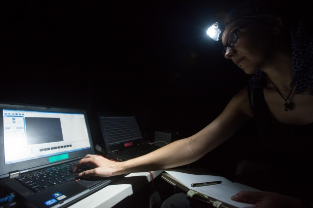Inga Geipel recording bat calls (Photo: Sean Mattson)