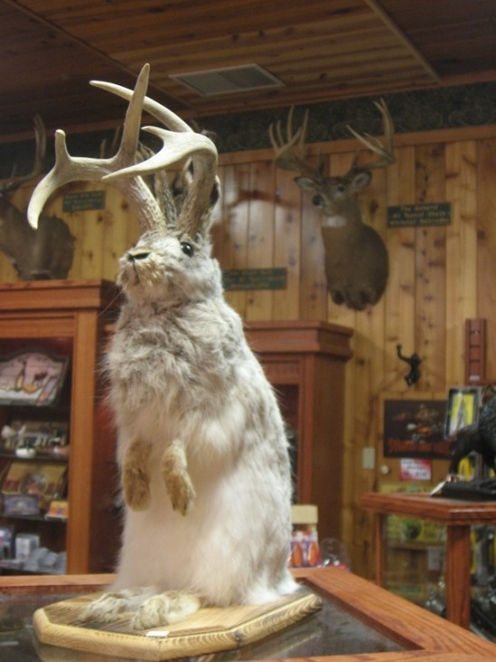 The American jackalope sold in stores (Photo Max -flikr)