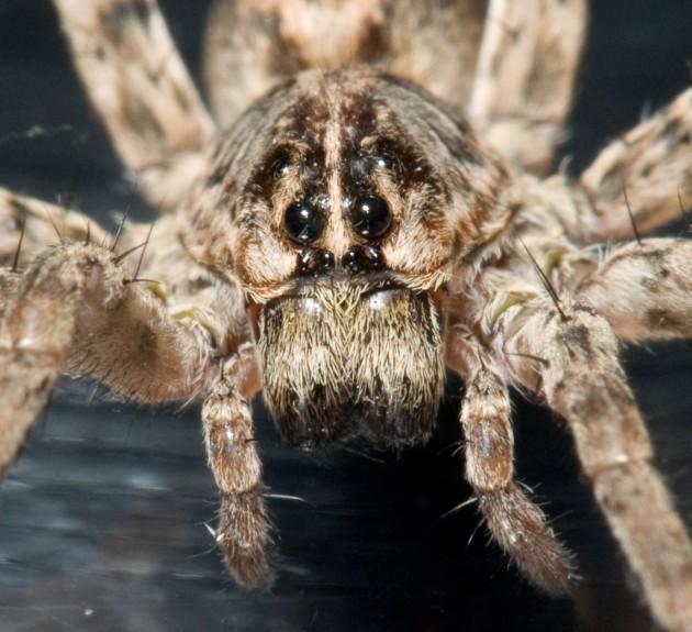 Eight Strange But True Spider Facts Smithsonian Insider