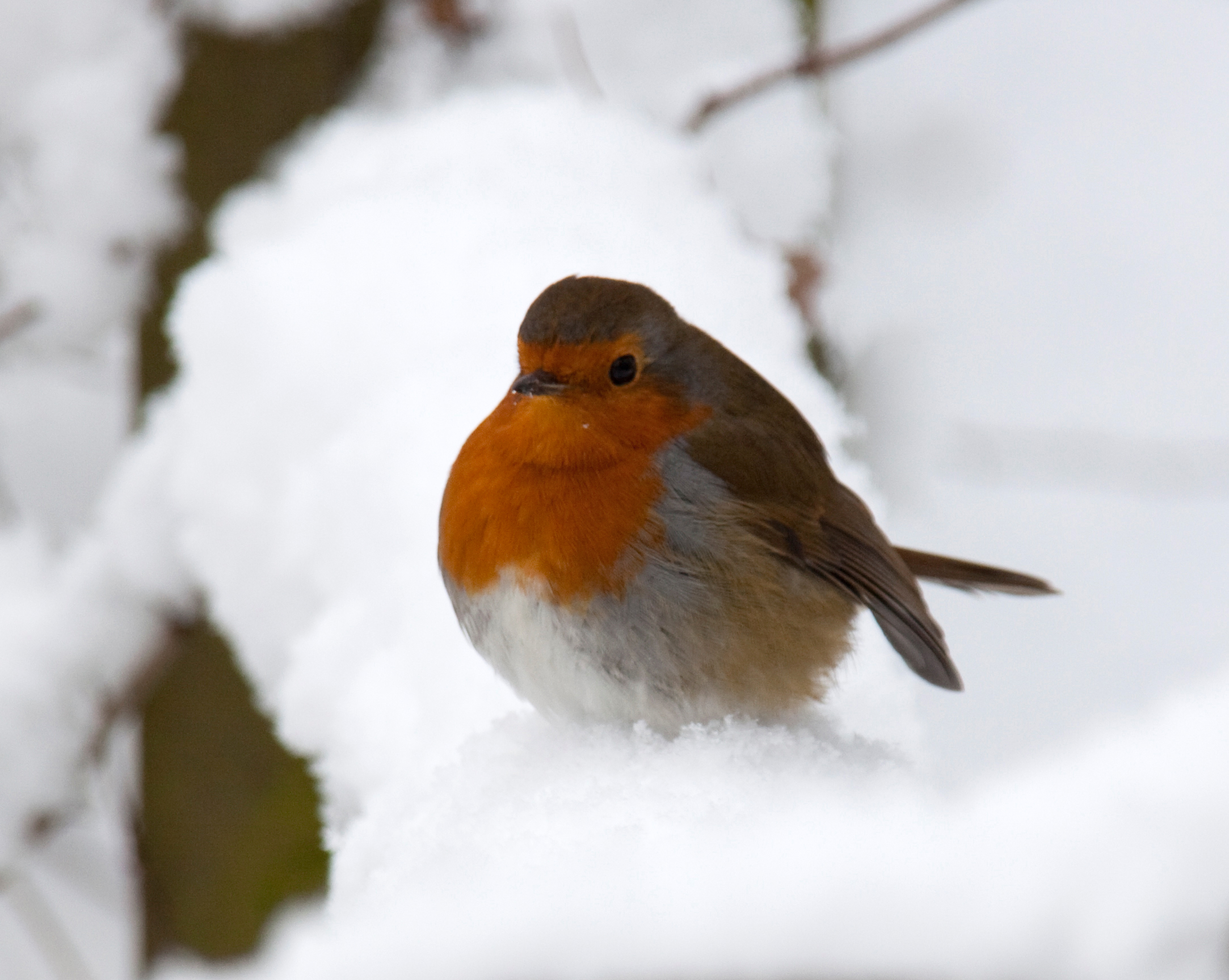 Where do birds winter 67