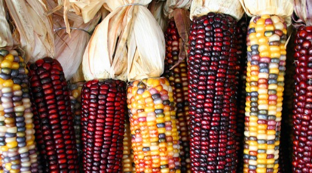 Corn entered Southwest U.S. first along highland route, DNA shows