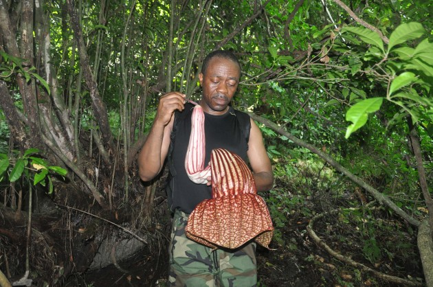"Smithsonian Botanist David Kenfack in Cameroon. The flower he is holding is from the liana ""Pararistolochia goldieana."""