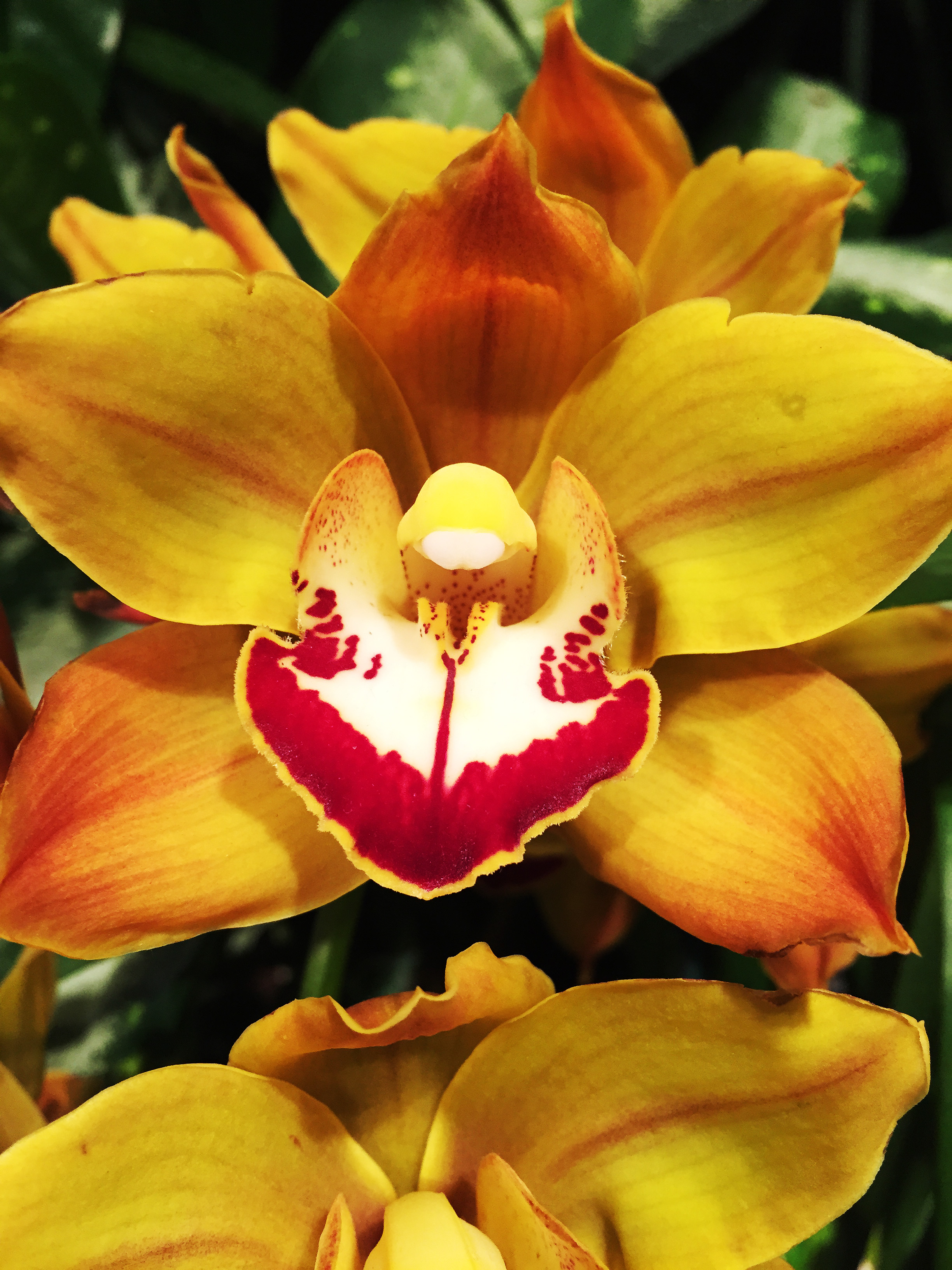 5 Crazy Things You Didnt Know About Orchids Smithsonian Insider