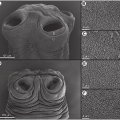 electron microscope images