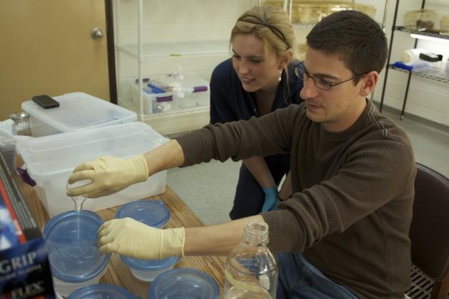 Matthew Becker, SCBI fellow and Shawna Cikanek, SCBI intern, preparing probiotic baths. (Photo by Brian Gratwicke)