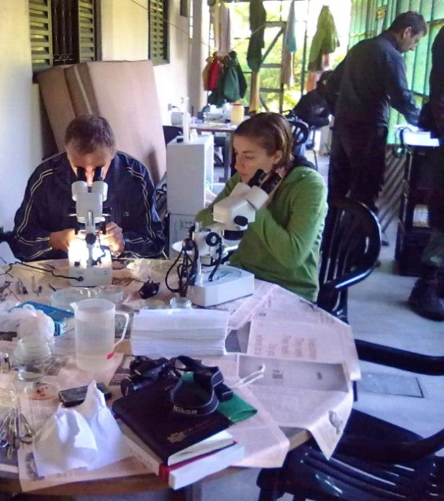 Smithsonian researcher Anna Phillips at work in Brazil, along with colleagues Boyko Georgiev, left, and Jean Mariaux, right. (Photo: Anna Phillips)