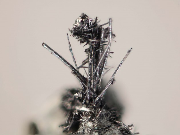 Under a microscope, clusters of molybdenum whiskers look very similar to graphite shavings. (Photo: John A Jaszczak)