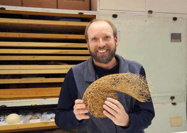 Smithsonian museum specialist Chris Milensky holds the intricately woven nest of the red-vented malimbe. It's just one of the 5,000 bird's nests in the Smithsonian's collection. (Photo by John Gibbons)