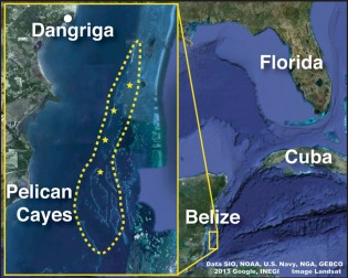 Range of the social wrasse, Halichoeres socialis (dashed yellow line), and lionfish collecting sites (yellow stars). Map data from SIO, NOAA, USA Navy, NGA, and GEBCO downloaded from Google Earth.